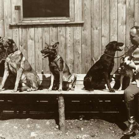 138 German Officers With Dogs