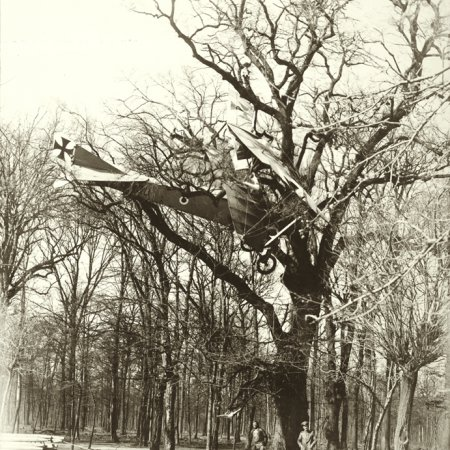 160 Aviatik Pranged In Tree