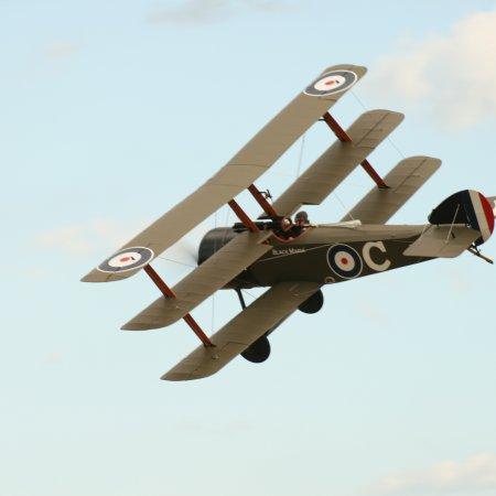 Soptripe 024 Fly