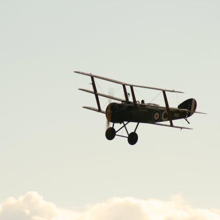 Soptripe 025 Fly