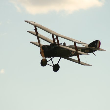 Soptripe 026 Fly