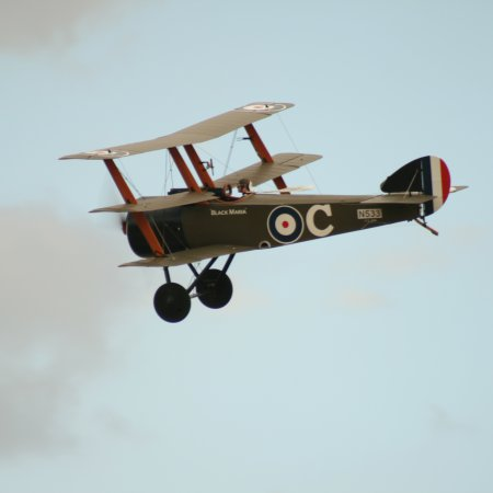 Soptripe 028 Fly